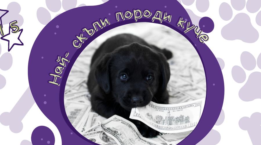 Топ 5 най-скъпи породи кучета