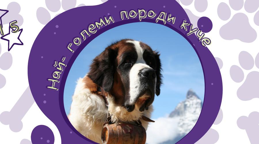 Топ 5 най-големи породи кучета